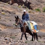 Central High Atlas Trek