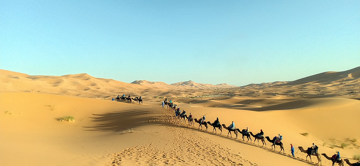 camel caravan take a direction to the sand dunes