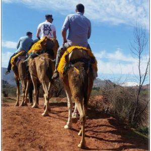 Asni Valley Camel Ride