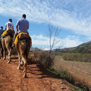 Camel Ride day trip -Atlas Mountains