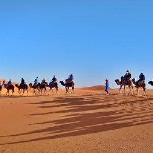 Camel Ride in the Sahara Desert 2021