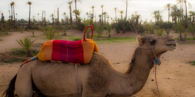 The palm grove marrakech day trips