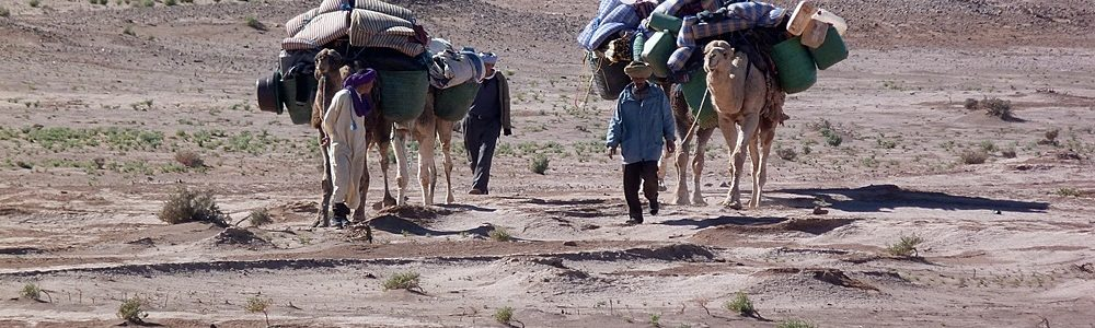 camel trekking - real experience